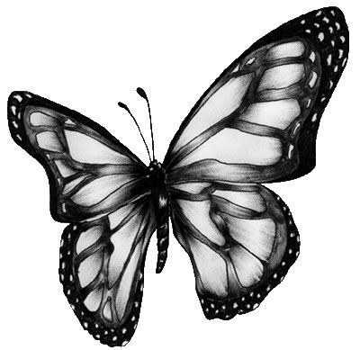 animated butterfly clipart. animated clip art